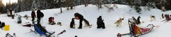 Mush and Rando activités chiens de traineau