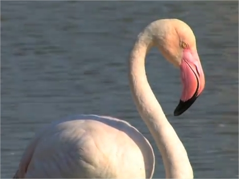Excursion en Provence : Camargue et Flamand Rose